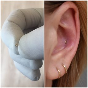 Conch Piercings with 14k Gold from BVLA done at Laughing Buddha Tattoo & Body Piercing Seattle, WA. Capitol Hill
