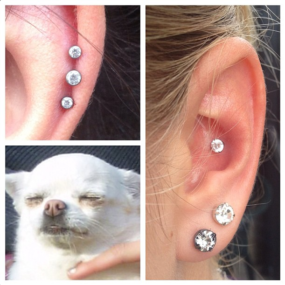 Helix and Conch piercing by Colin O at Laughing Buddha Seattle, WA Capitol Hill
